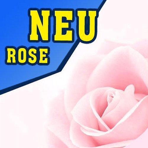 P902 - 325ml Shisha Molasse - Rose